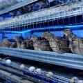 В Актобе бизнесмены открыли самую крупную перепелиную ферму