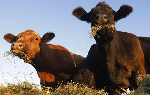 В Жамбылской области погибло более 170 голов скота