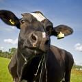 Производители мяса в Казахстане несут убытки