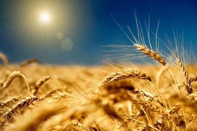 Экспорт зерна из РК сократился на 32%
