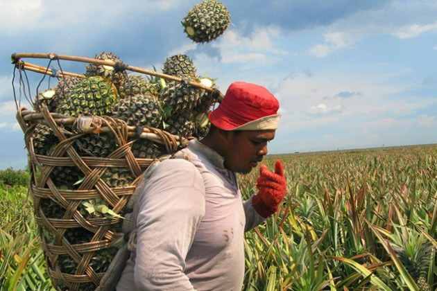 Атырауская область договаривается с ЮАР о поставках фруктов
