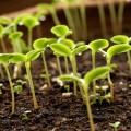 В ЕАЭС начал действовать единый рынок семян сельхозрастений