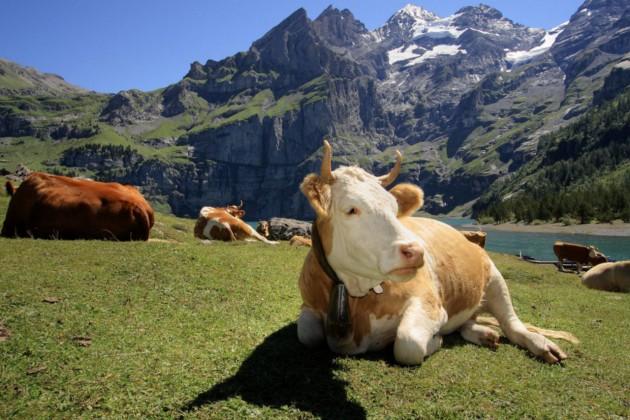 C1октября вРоссии могут ввести запрет наввоз животноводческой продукции изРК