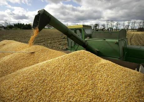 Зерно будут отгружать на экспорт круглосуточно