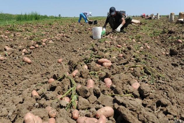 Украина разоряет сельхозпроизводителей Молдавии