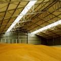 Цена на зерно выросла до $280 за тонну