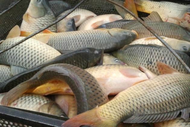 Почти 51% спроса на рыбную продукцию обеспечивает импорт