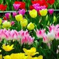 ВАктюбинской области построят цветочную теплицу