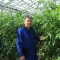 Казахстанская теплица снабжает овощами города Сибири