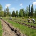 В РК для деградированных земель предусмотрена высадка лесов