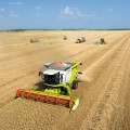 Как казахстанское зерно закрыло сезон