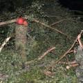 Восточный Казахстан пострадал от сильного урагана