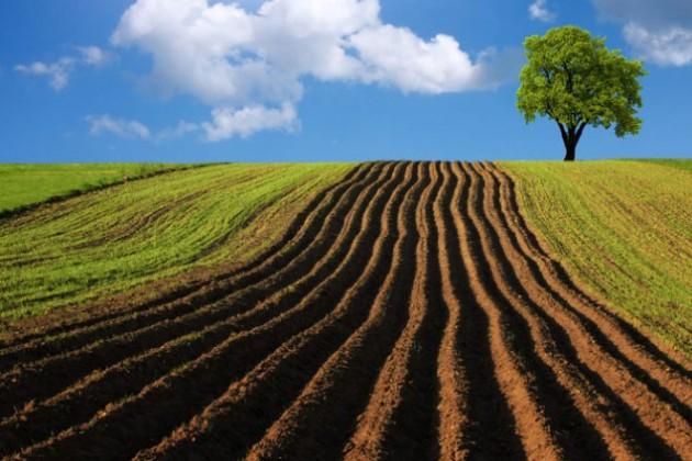 Чиновники 4 районов отдавали сельхозземли не по назначению