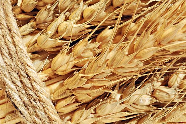 Украина на сегодня экспортировала 25,6 млн тонн зерновых
