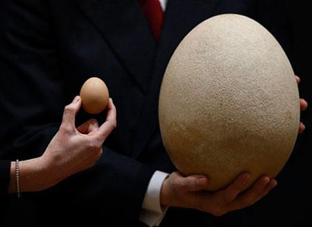 Яйцо на Christie's  купили за $102 тыс.