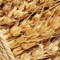 Около 5 млн тонн казахстанского зерна отгружено на экспорт