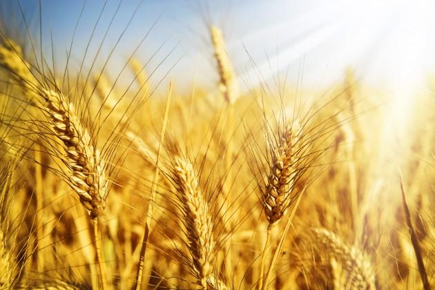 Казахстан планирует экспортировать до 7 млн тонн зерна