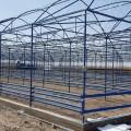 В Туркестанской области построят высокотехнологичную теплицу