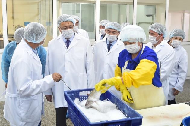 ВШардаре произведено рыбной продукции на1,3млрд тенге