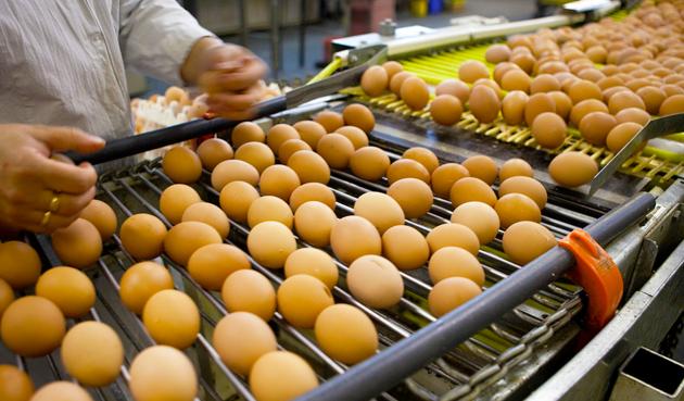 Более 10млн яиц экспортировала вАфганистан Павлодарская область