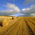 Мораторий напродажу земли утвердил сенат Парламента