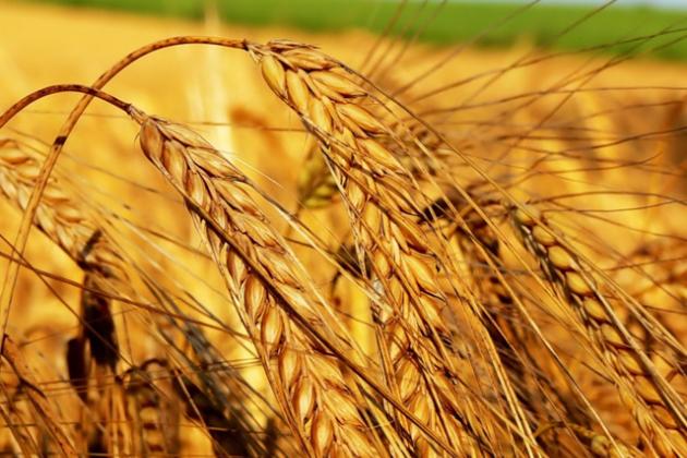 Сев зерноколосовых на юге выполнен на 86%