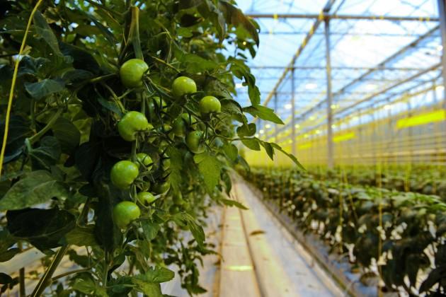 Сельское хозяйство нуждается винвестициях