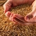Аграрии получили свыше 800 млн тенге на закуп семян