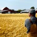 Будет ли продолжена поддержка средних и мелких фермерских хозяйств?