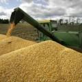 Через аукционы продано около 500 тыс. тонн зерна